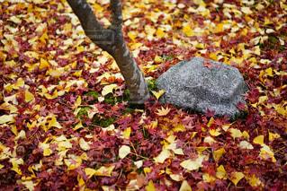 葉の上に座ってピザの写真・画像素材[892534]