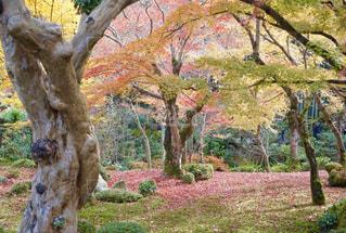木の隣に立っているキリンの写真・画像素材[893117]