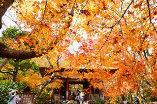 京都,観光,嵐山,常寂光寺
