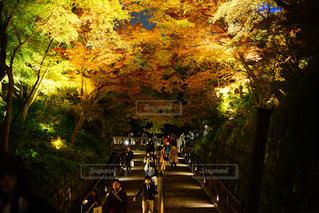 清水寺,紅葉,京都,観光,ライトアップ,坂,夜の紅葉,夜の京都