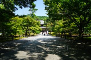 京都,緑,影,光,観光,新緑,南禅寺,夏の京都,夏の南禅寺