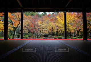 絵画 - No.925450