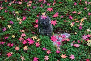 ピンクの花が庭園に - No.925452