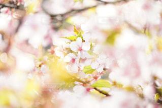 近くの花のアップの写真・画像素材[1370386]