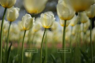 近くの花のアップの写真・画像素材[1370404]