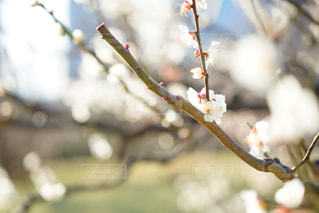 木の枝にとまった鳥の写真・画像素材[1370409]