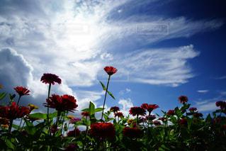 曇りの日に花の花瓶の写真・画像素材[1370412]