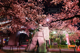 桜の写真・画像素材[1703961]