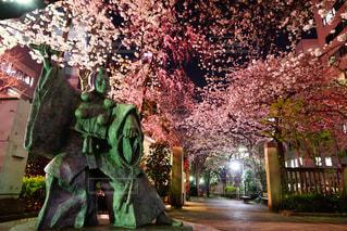 桜の写真・画像素材[1703962]