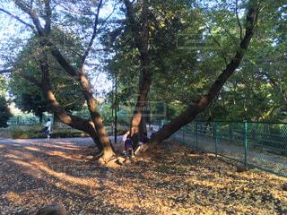 秋の木登り - No.847527