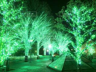 緑色のイルミネーションの写真・画像素材[931627]