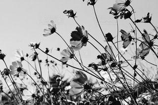 木の花の花瓶の写真・画像素材[818177]