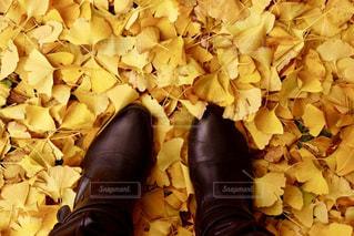 銀杏とブーツの写真・画像素材[885893]