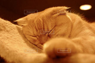 眠っているねこの写真・画像素材[1257543]