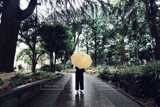 傘と木と休日の写真・画像素材[829643]