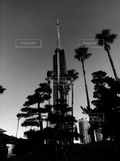 福岡タワーとシーサイドももちマリゾン夜景の写真・画像素材[854665]