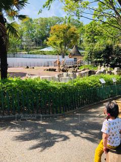 公園,春,屋外,後ろ姿,子供,女の子,人物,背中,人,キリン,動物園,お散歩,一休み,お出かけ,3歳