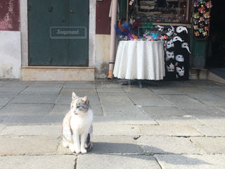 店の前に佇むネコ - No.1256669