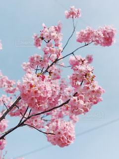 植物にピンクの花の写真・画像素材[1468084]