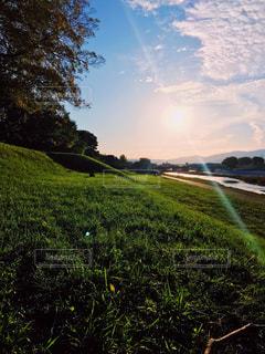 背景の木と大規模なグリーン フィールドの写真・画像素材[1468866]