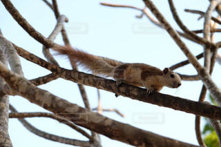 木の枝にとまるリースの写真・画像素材[740276]
