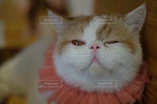 近くに猫のアップの写真・画像素材[740995]