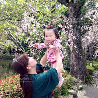 桜,たかいたかい,三嶋大社,ママと子供