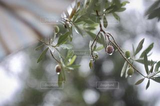 近くの木の枝の写真・画像素材[812934]