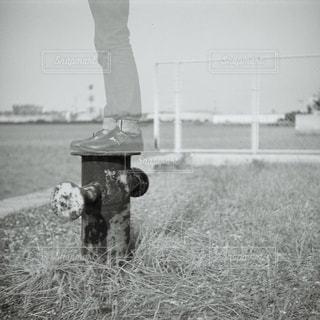 草の消火栓の写真・画像素材[818717]