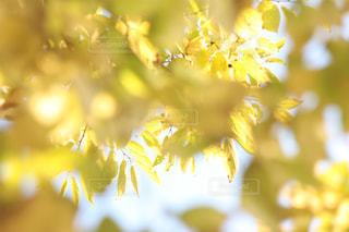 近くの花のアップの写真・画像素材[848104]