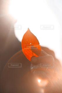 秋見つけた。の写真・画像素材[856097]