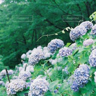 近くの緑の植物をの写真・画像素材[1236524]