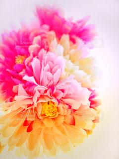 近くの花のアップの写真・画像素材[1884851]