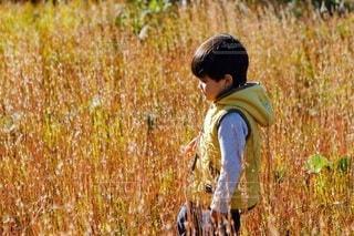 草むらを歩く男の子の写真・画像素材[3739474]