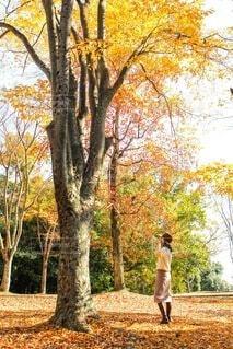 紅葉した木の前に立つカーボーイハットの女性の後ろ姿の写真・画像素材[3931365]