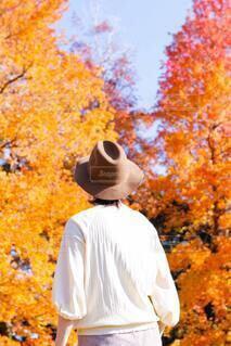 紅葉した木の前に立つカーボーイハットの女性の後ろ姿の写真・画像素材[3931364]
