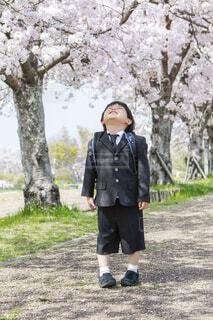 桜並木で見上げて笑う男の子の写真・画像素材[4372025]