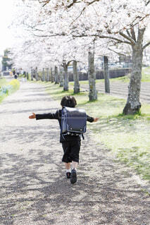 桜並木を手を広げて走る男の子の写真・画像素材[4372026]