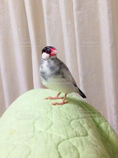 ベッドの上に座っている小さな鳥の写真・画像素材[741504]