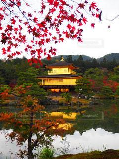 秋,紅葉,京都,旅,金閣寺