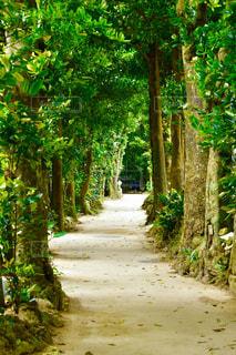 木々に囲まれた道の写真・画像素材[3143544]