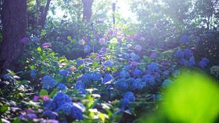 近くのフラワー ガーデン - No.880671