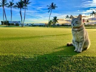 草で覆われた野原の上に座っている猫の写真・画像素材[4139275]