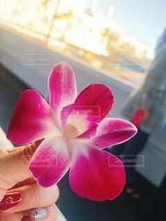 花,屋内,赤,綺麗,ハイビスカス,ハワイ,リゾート,草木