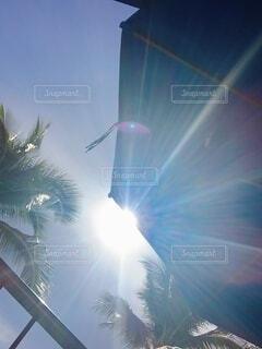 空,花火,日差し,樹木,ハワイ,リゾート,明るい,日中