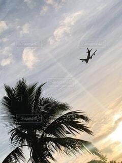 空,屋外,雲,飛行機,シルエット,樹木,ヤシの木,ハワイ,航空機,草木,パーム