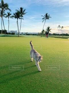 犬,猫,空,動物,屋外,景色,草,ネコ