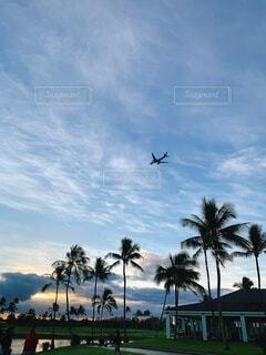 空,屋外,雲,樹木,朝,ヤシの木,ハワイ,草木,エモーショナル,パーム