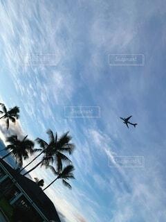 空,屋外,雲,飛行機,飛ぶ,樹木,ヤシの木,ハワイ,航空機,エモーショナル