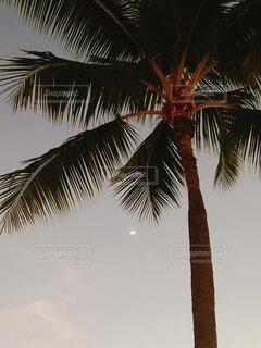 空,屋外,夕方,樹木,ヤシの木,ハワイ,草木,エモーショナル,パーム,ヤシ目